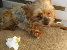 TESTOVÁNÍ  Krmivo pro malé psy Brit Care Mini  2062fc92d1